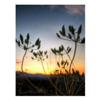 Saddle Rock Sunset Postcard