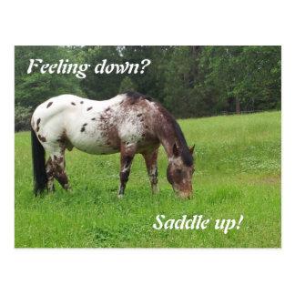 Saddle Up Horse Postcard