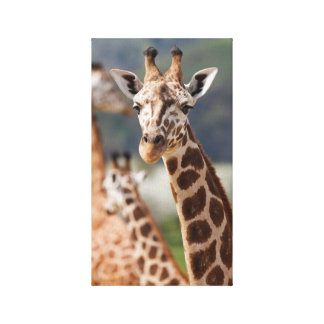 Safari Africa Giraffe Canvas Print