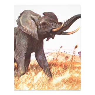 Safari African Jungle Destiny Animals Elephants Letterhead Template