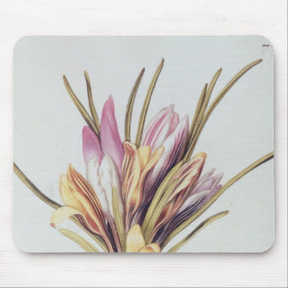 Saffron or Crocus, from 'La Guirlande de Julie' Mouse Pad