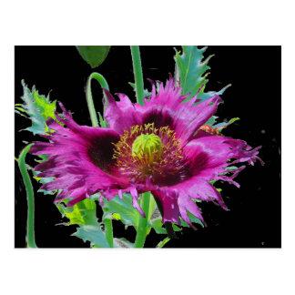 Sagacious poppy /foliage hz postcard
