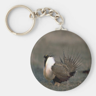 Sage grouse strutting key chain