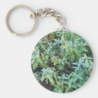 Sage plant basic round button keychain