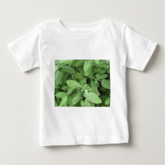 Sage plant in the garden. Tuscany, Italy Baby T-Shirt