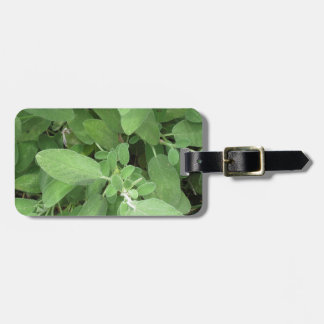 Sage plant in the garden. Tuscany, Italy Bag Tag