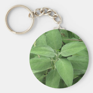 Sage plant in the garden. Tuscany, Italy Basic Round Button Keychain