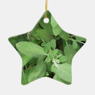 Sage plant in the garden. Tuscany, Italy Ceramic Star Ornament