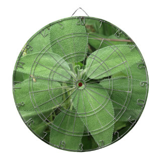 Sage plant in the garden. Tuscany, Italy Dart Boards