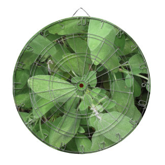 Sage plant in the garden. Tuscany, Italy Dartboard