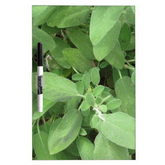 Sage plant in the garden. Tuscany, Italy Dry Erase Boards