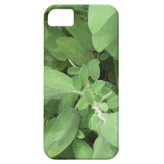 Sage plant in the garden. Tuscany, Italy iPhone 5 Covers