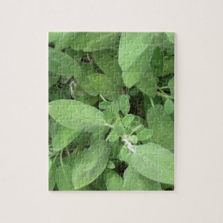 Sage plant in the garden. Tuscany, Italy Jigsaw Puzzle