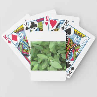 Sage plant in the garden. Tuscany, Italy Poker Deck