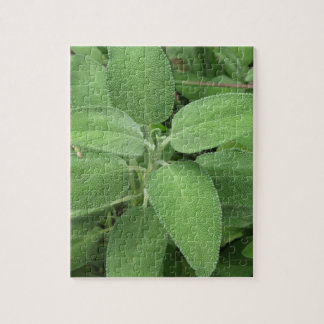 Sage plant in the garden. Tuscany, Italy Puzzles