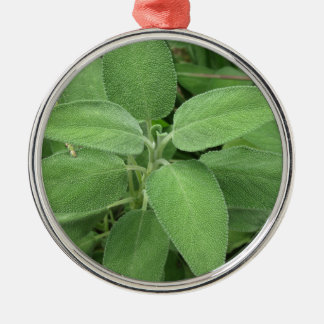 Sage plant in the garden. Tuscany, Italy Silver-Colored Round Ornament
