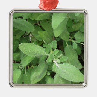Sage plant in the garden. Tuscany, Italy Silver-Colored Square Ornament