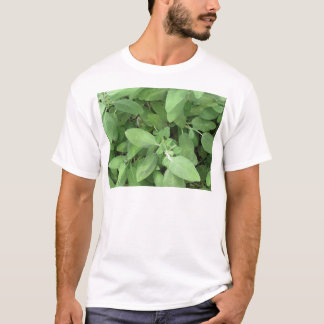 Sage plant in the garden. Tuscany, Italy T-Shirt