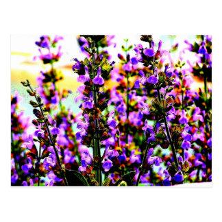 sageflower postcard