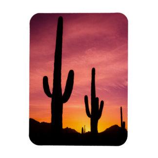Saguaro cactus at sunrise, Arizona Magnet