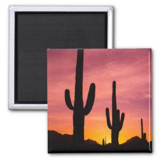 Saguaro cactus at sunrise, Arizona Square Magnet