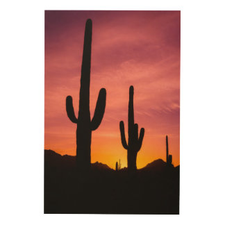 Saguaro cactus at sunrise, Arizona Wood Print