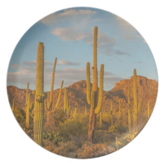 Saguaro cactus at sunset, Arizona Party Plate