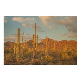 Saguaro cactus at sunset, Arizona Wood Print
