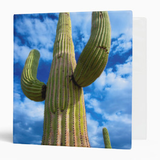 Saguaro cactus portrait, Arizona Binder
