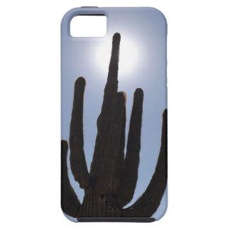 saguaro cactus with sun backdrop iPhone 5 cover