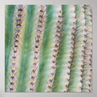 Saguaro Closeup | Poster