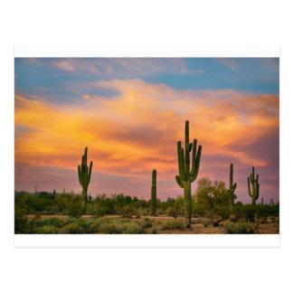 Saguaro Desert Life Postcard