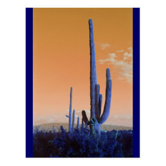 Saguaro in Blue Postcard