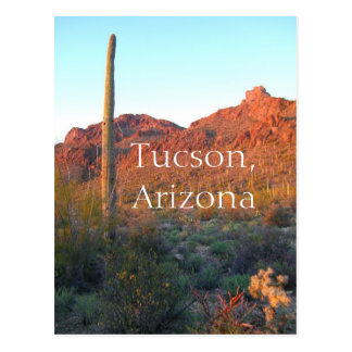 Saguaro National Park Tucson, Arizona Postcard
