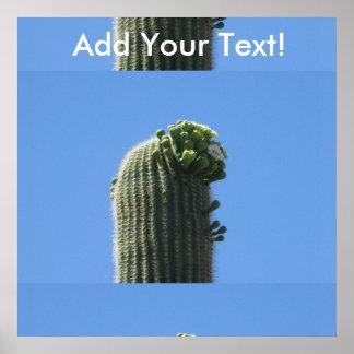 Saguaro Top Flowering Buds Poster