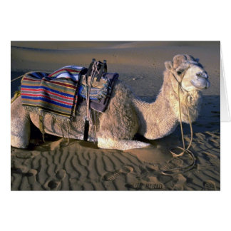 Sahara Desert near Merzouga, Morocco Card