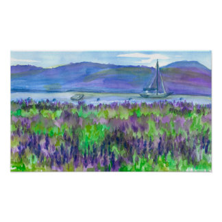 Sailboat Purple Lupines Watercolor Painting Poster