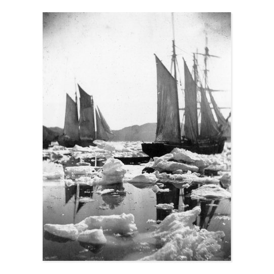 Sailing Ships in an Ice Field - 1869 Photo Postcard