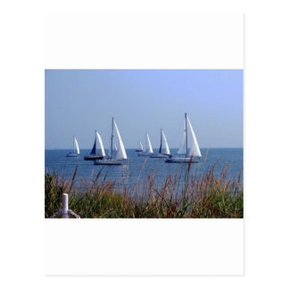 Sails on the Chesapeake Postcard