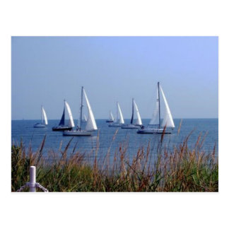 Sails on the Chesapeake Postcard