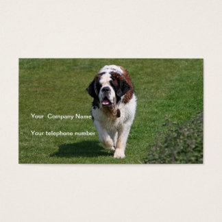 Saint Bernard dog beautiful photo business card