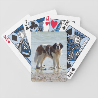Saint Bernard dog beautiful photo on beach Bicycle Playing Cards