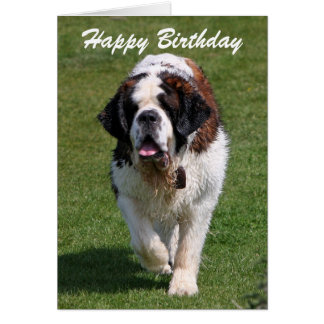 Saint Bernard dog custom birthday greetings card