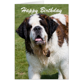 Saint Bernard dog happy birthday greetings card