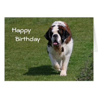 Saint Bernard dog photo happy birthday card