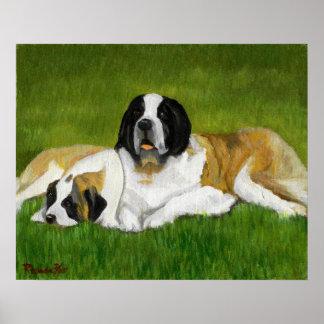 Saint Bernard Dog Portrait Poster