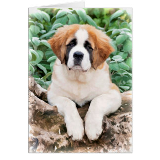 Saint Bernard Puppy Greeting Card