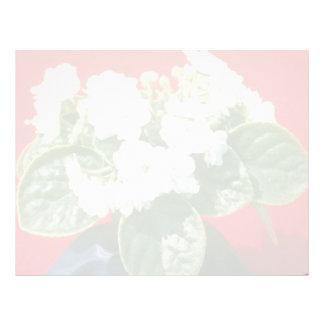 Saintpualia 'Snow Ballet' (African Violet) Letterhead Template