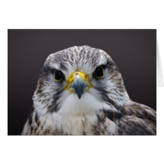 Saker Falcon greetings card, blank inside. Card