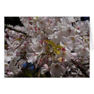 Sakura Cherry Blossom Card